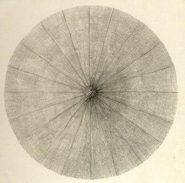 Image of Litharachnium