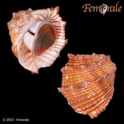 140.0fc59dc20ef66d4a16ceae88ef9f9a95
