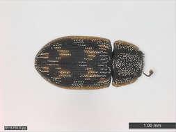 Image of Hexapods