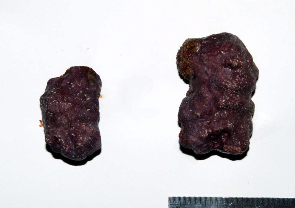 Image of Corallinaceae