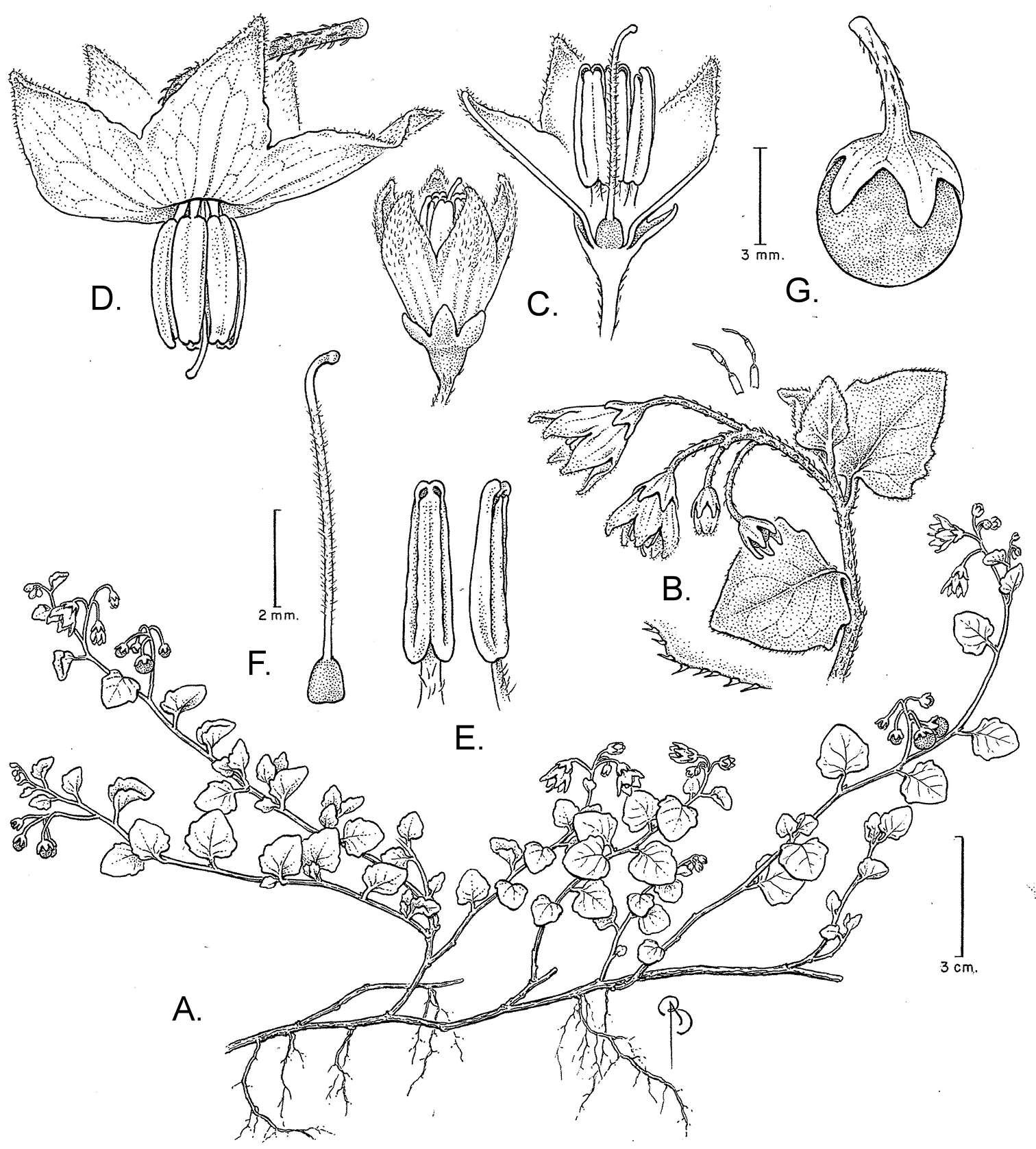 581.phytokeys 47 4423 sp 1 p 1