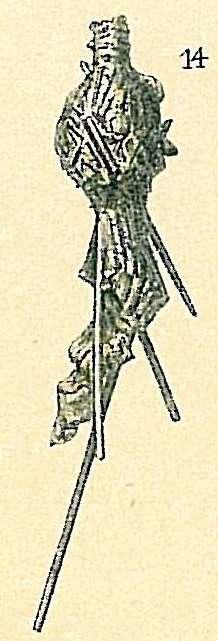 Image of Hormosinina Haeckel 1894