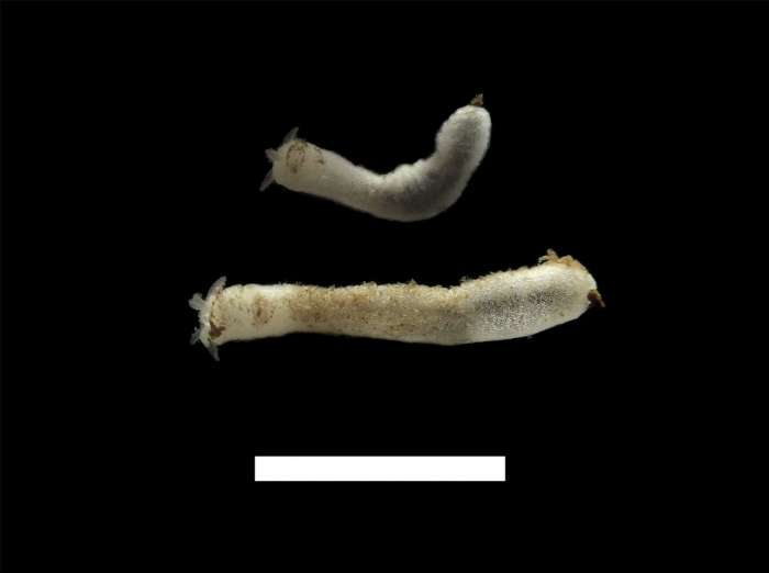 533.worms image 102836