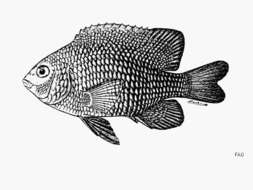 Image of Gregory Fishes