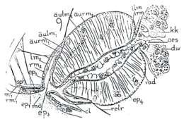 Image of Provortex