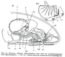Image of Proxenetes