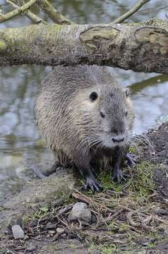Image of River Rats
