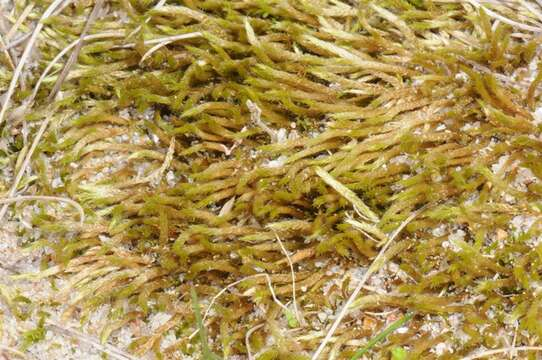 Image of mosses