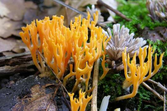 Image of Gilled Fungi