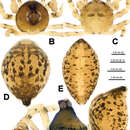Image of <i>Trogloneta yuensis</i> Lin & Li 2013