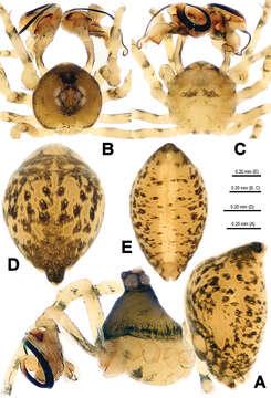 Image of Trogloneta