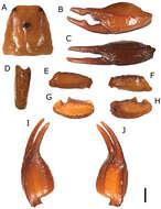 Image of Euscorpius
