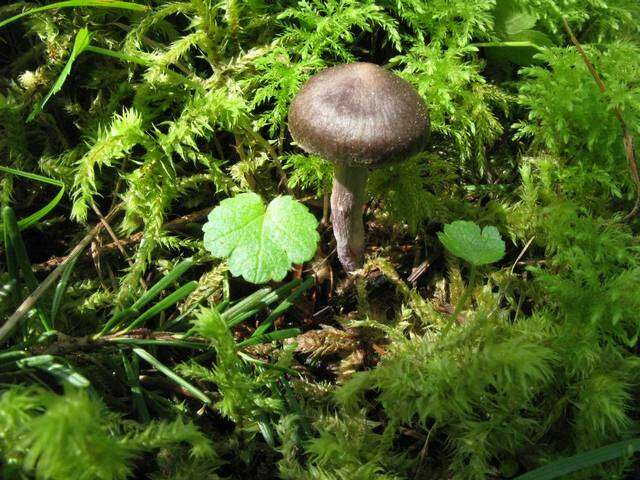 Image of Spring webcap