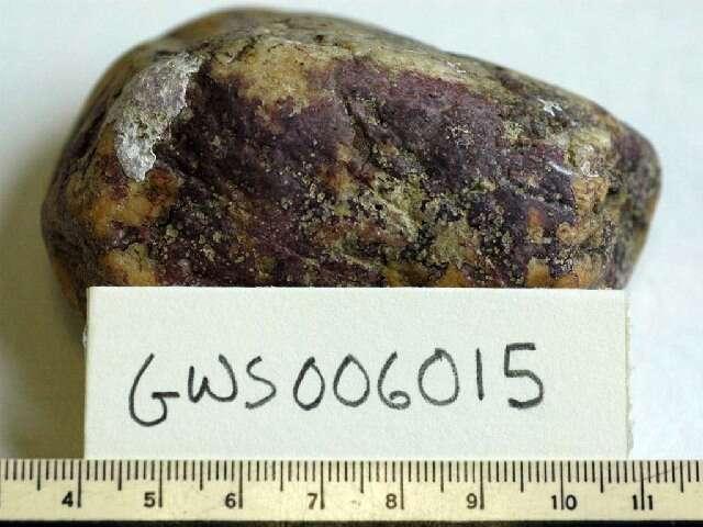 Image of Hildenbrandiophycidae