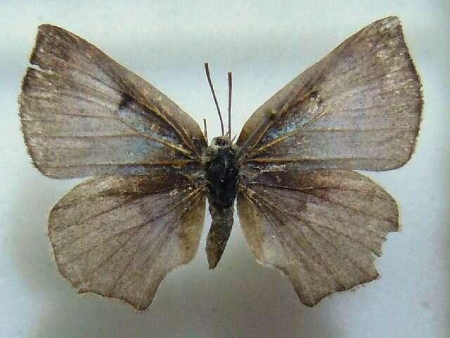 Image of butterflies
