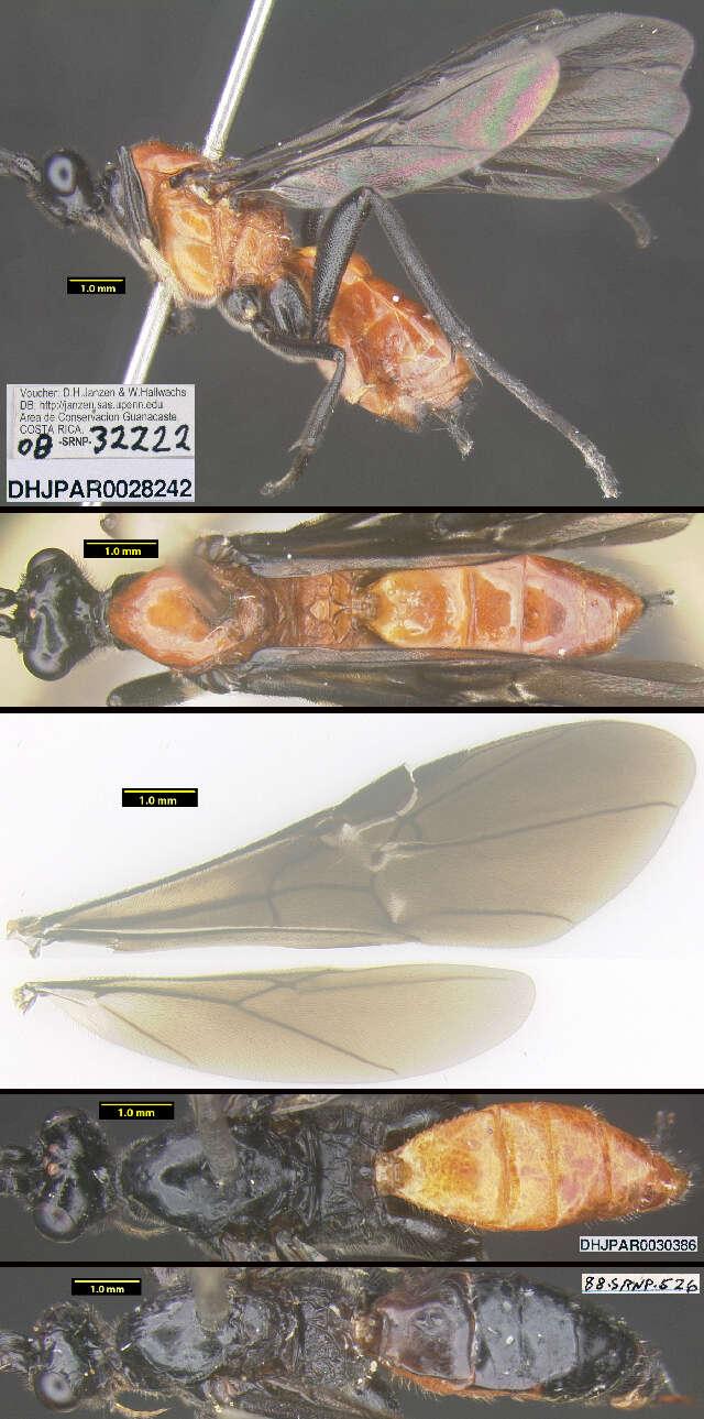 Image of Hemichoma