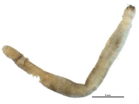 Image of spiralians