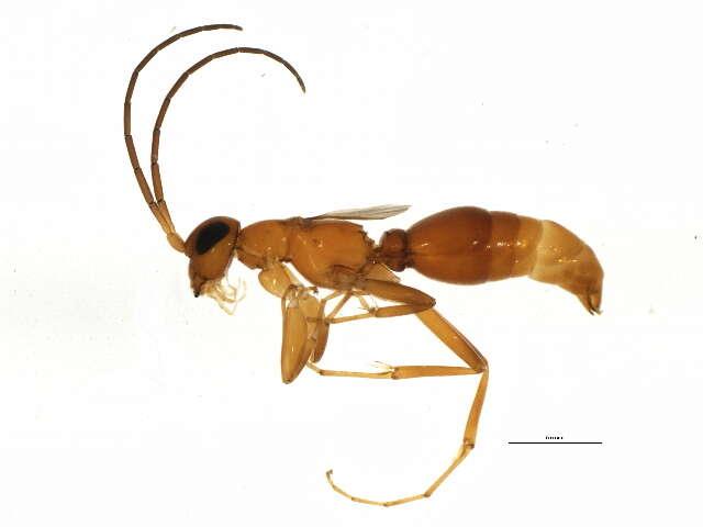 Image of Vespoidea