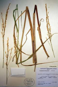 Image of rivergrass