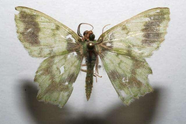 Image of Cathydata