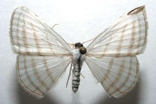 Image of Racasta