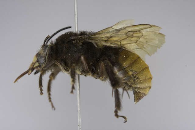 Image of bees & apoid Wasps