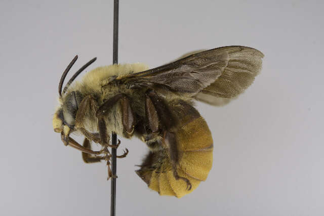 Image of bees