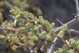 Imagem de Asparagus