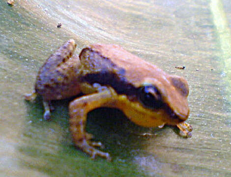 Image of tropical frogs