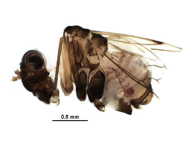 Image of Psocomorpha