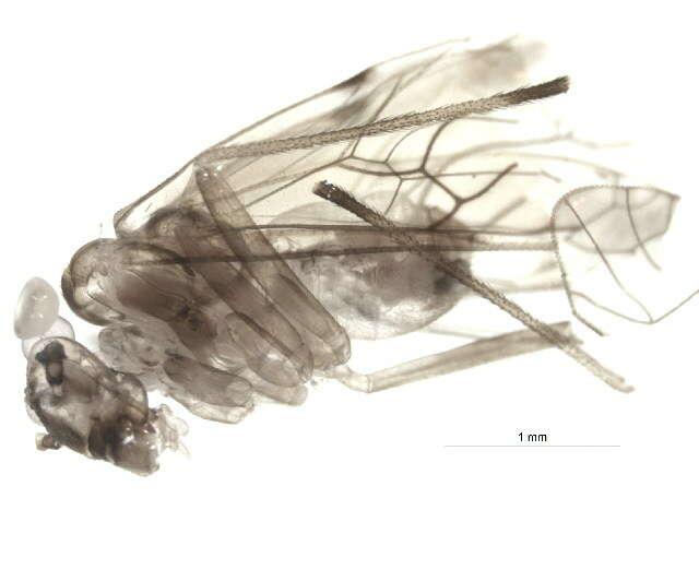 Image of bark lice, book lice and true lice