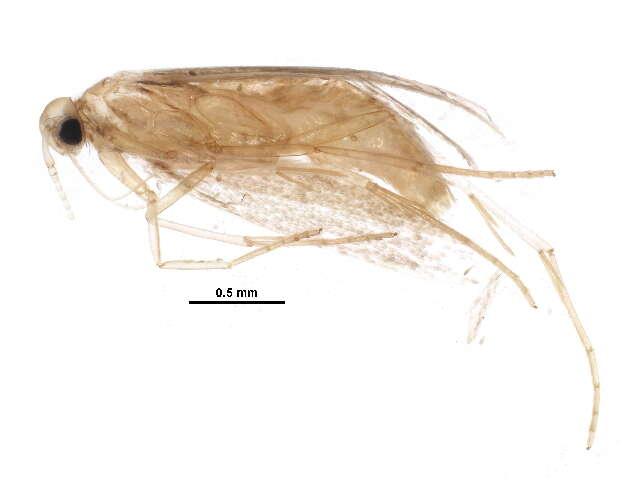 Image of Twirler Moths and kin