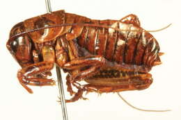 Image of grasshoppers and relatives