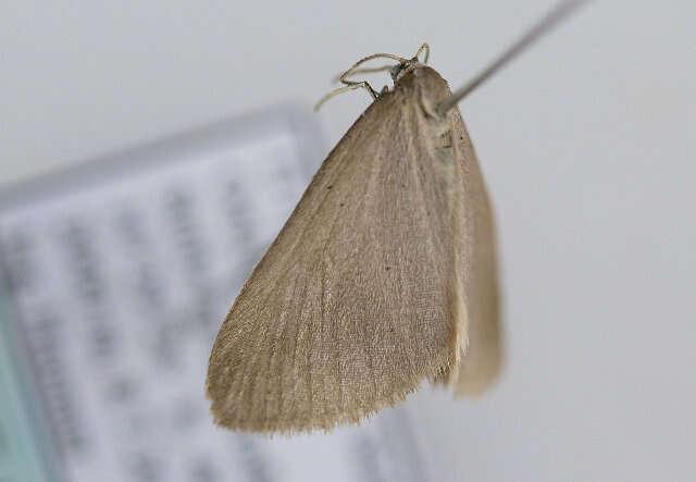 Image of Minoa