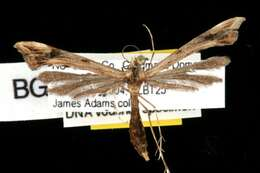 Image of Insects with complete metamorphosis