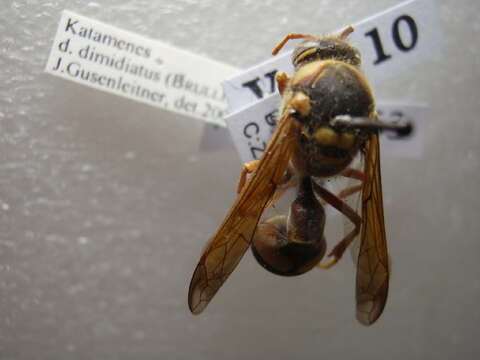 Image of Eumenidae