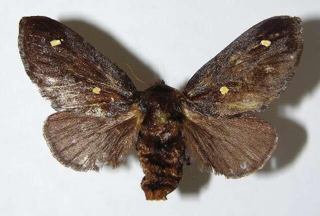 Image of Zygaenoidea