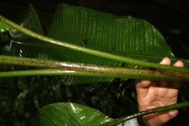 Image of Monocots