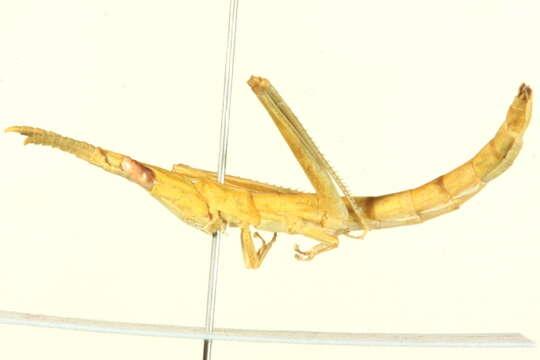 Image of Pancrustacea