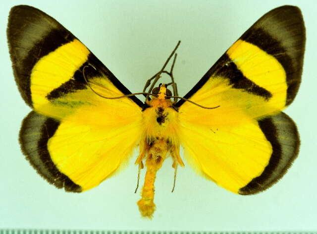 Image of Celerena