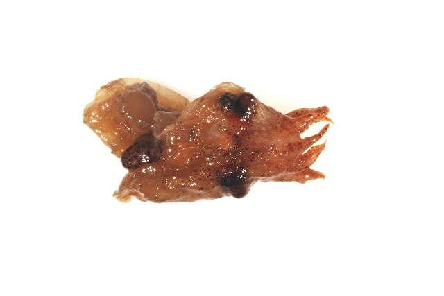 Image of molluscs