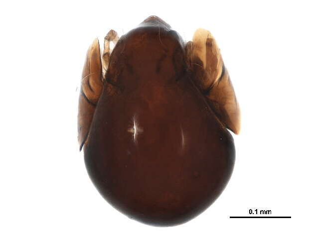 Image of Chelicerates
