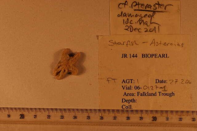 Image of echinoderms