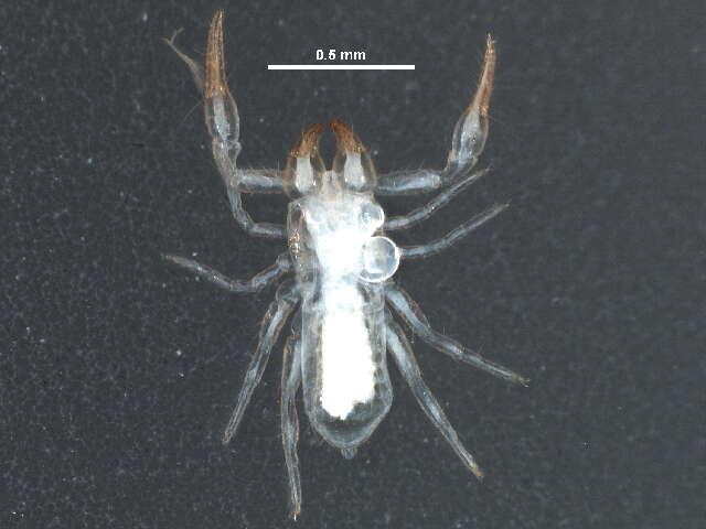 Image of Epiocheirata