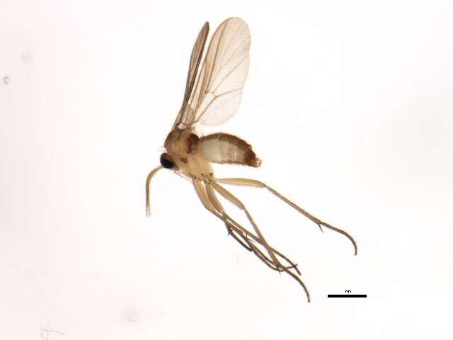 Image of Diadocidiidae