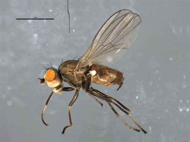 Image of flies