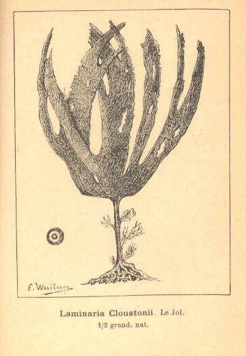 Image of heterokont