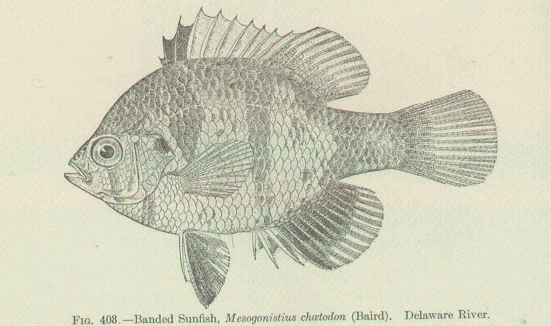 Image of rainbowfishes