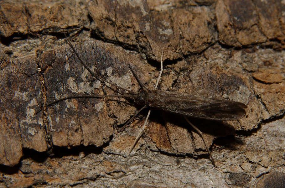 Image of Integripalpia