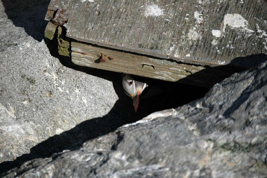 Image of shorebirds and relatives